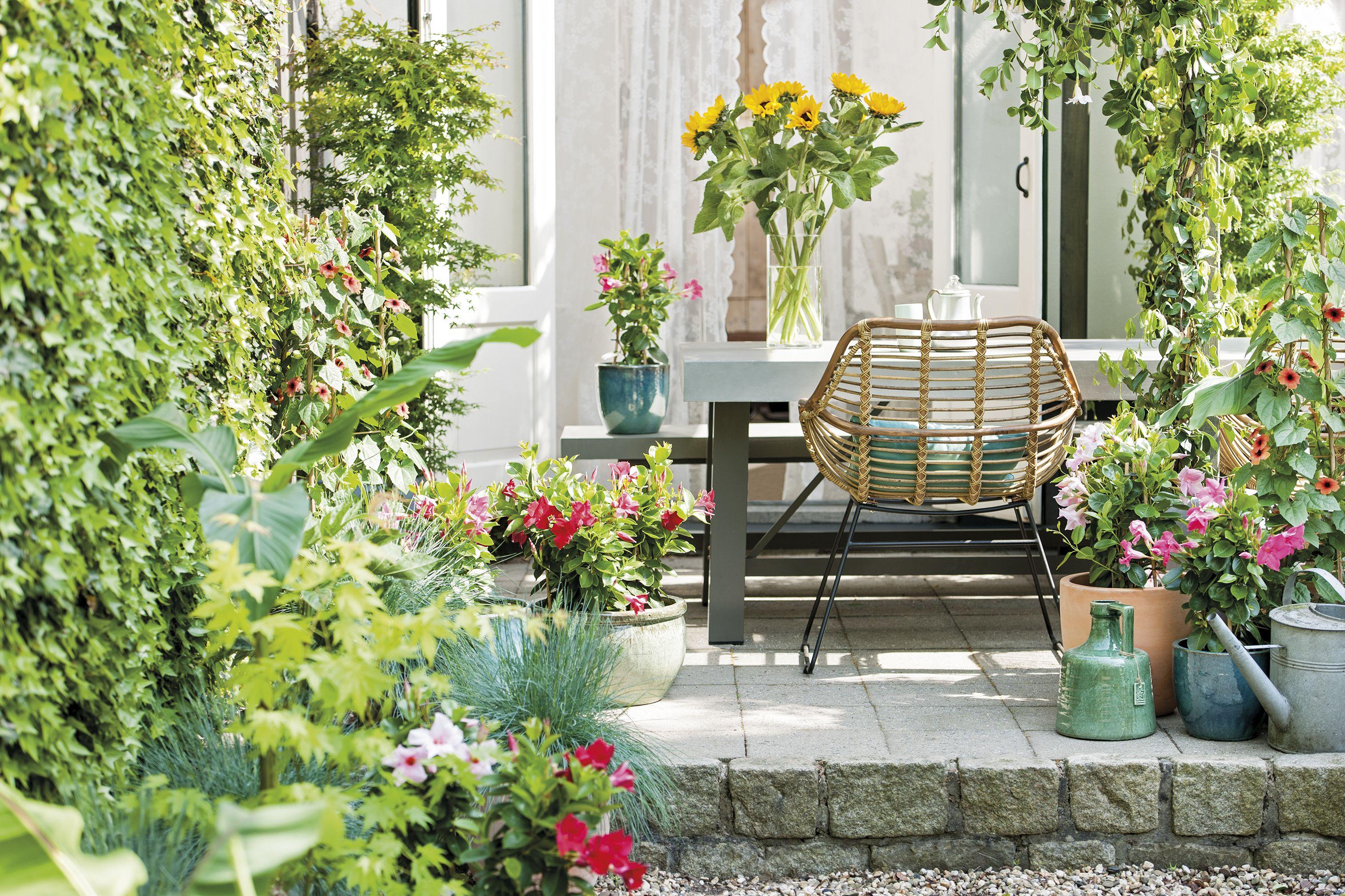 Verticale Tuin Intratuin : Maak je tuin voorjaar klaar intratuin terras intratuin