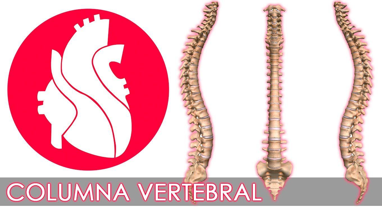 Columna Vertebral y generalidades de las vértebras | Medicina ...