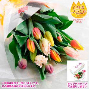 チューリップ切花-ギフトケース入り (12本入り)