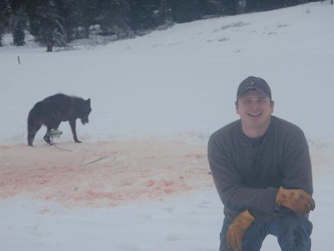 Petition  Stop The Torture Of Wolves In Our Forests  ChangeOrg