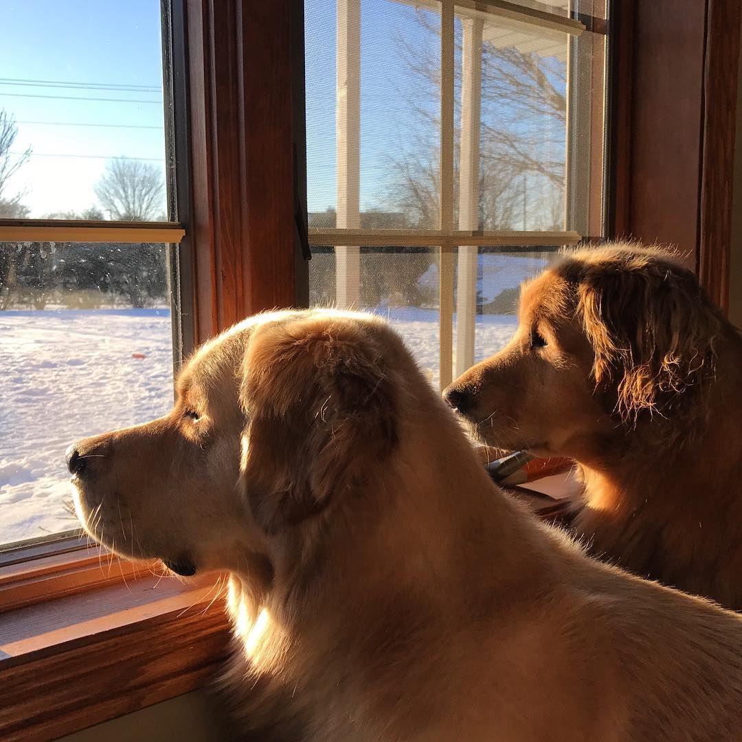 Finn and Teddy.. ansiosos por salir 💙❄😙❄💙