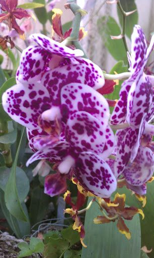 Orchid Mystique: Nature's Triumph  February 18 – April 29, 2012