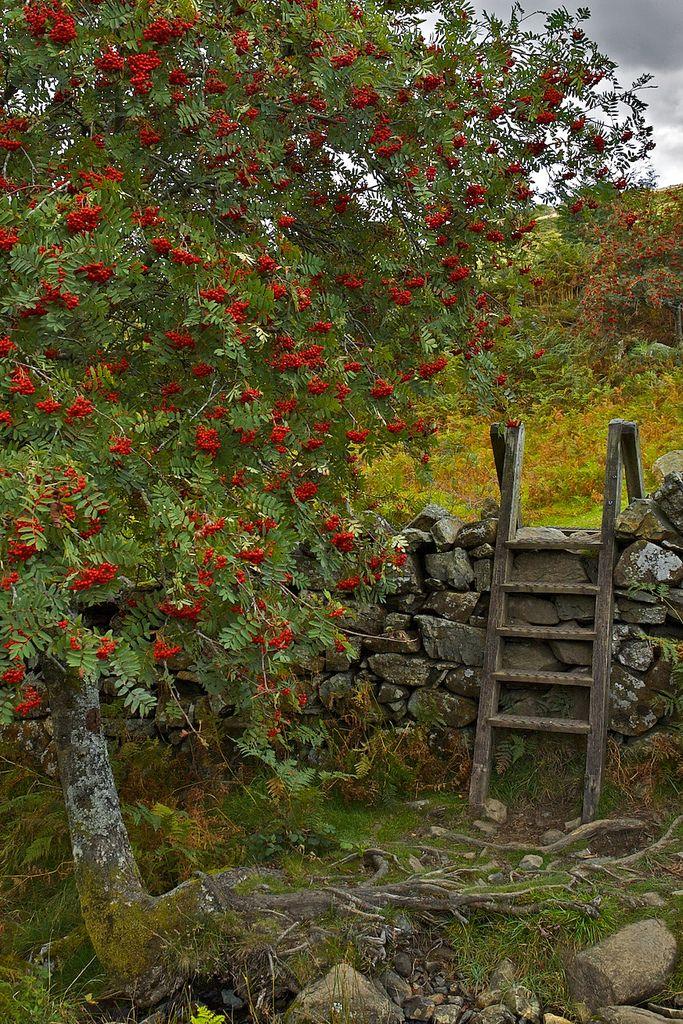 https://flic.kr/p/71SFND   Stile near Rowan Tree, Crafnant, Snowdonia
