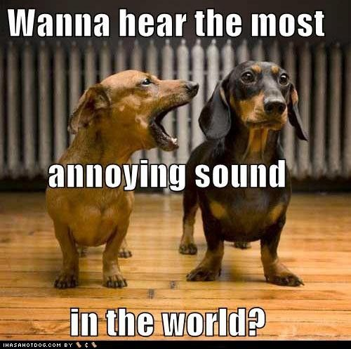 Yes My Doxie Makes The Most Annoying Sound Barking Funny