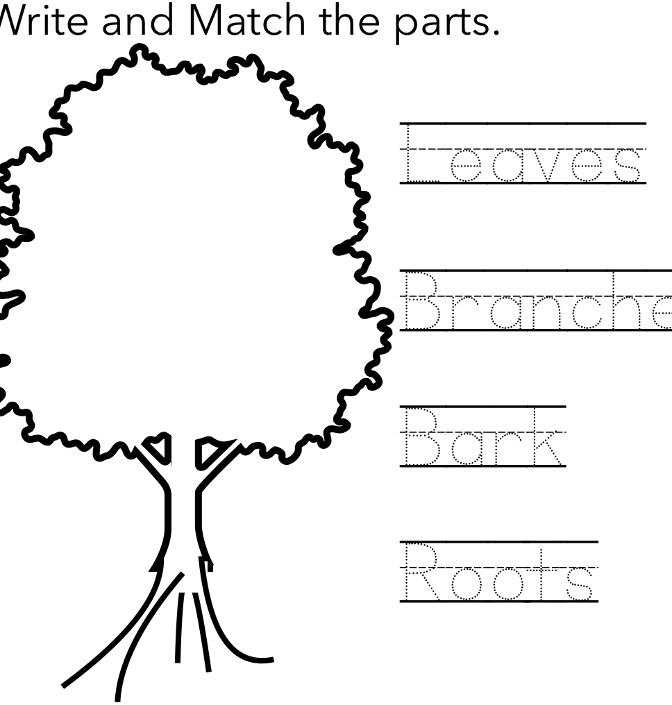 Basic Parts Of A Tree Worksheet Preschool Worksheets Worksheets Free Downloadable Worksheets [ 1016 x 968 Pixel ]