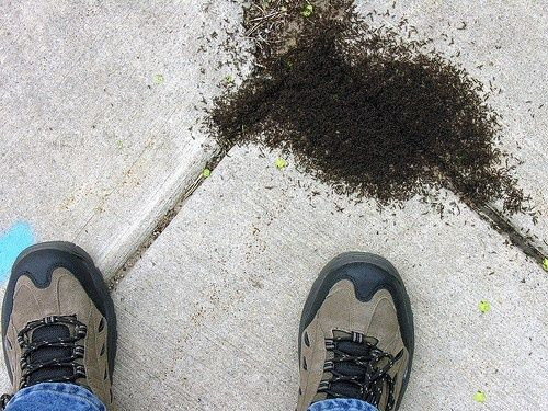 how to kill ants without pesticides salt cayenne pepper equal parts white vinegar and water. Black Bedroom Furniture Sets. Home Design Ideas