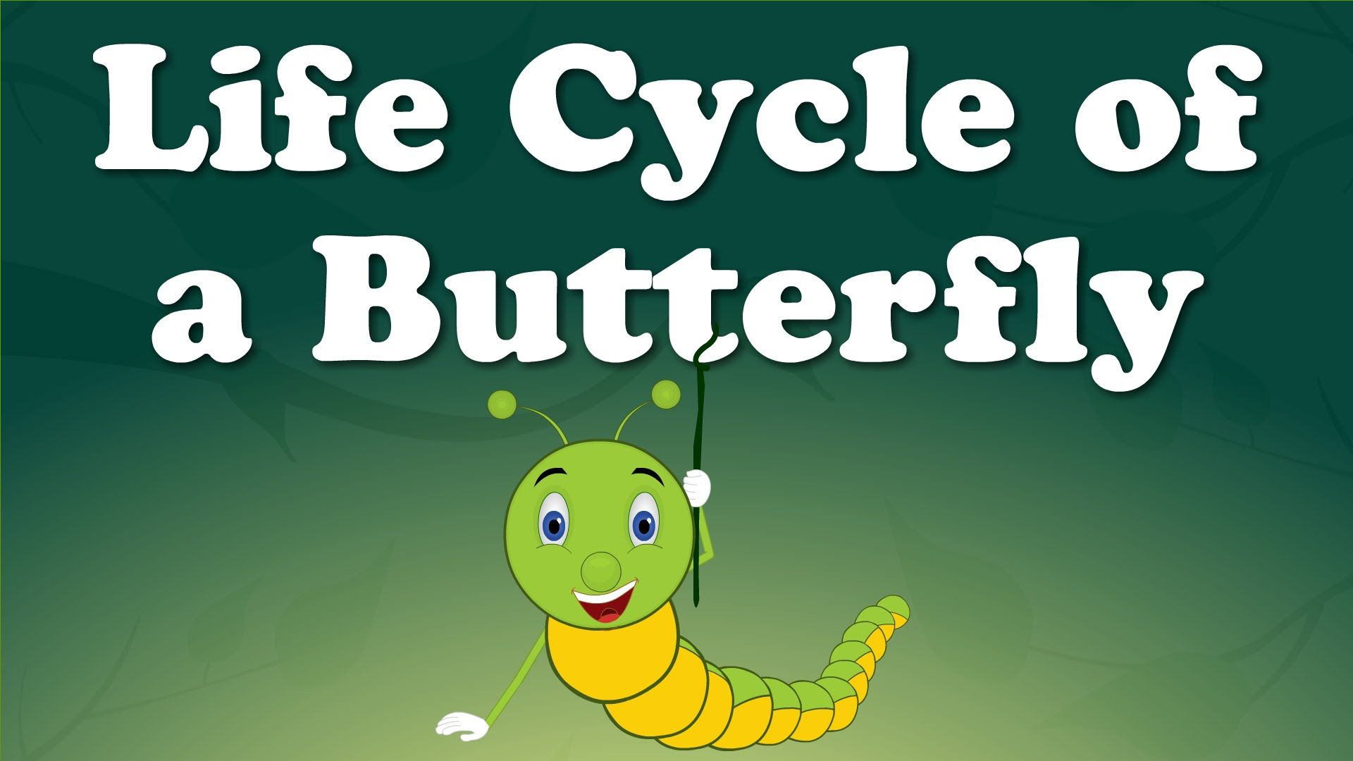 You Will Learn About Life Cycle Of A Butterfly In This