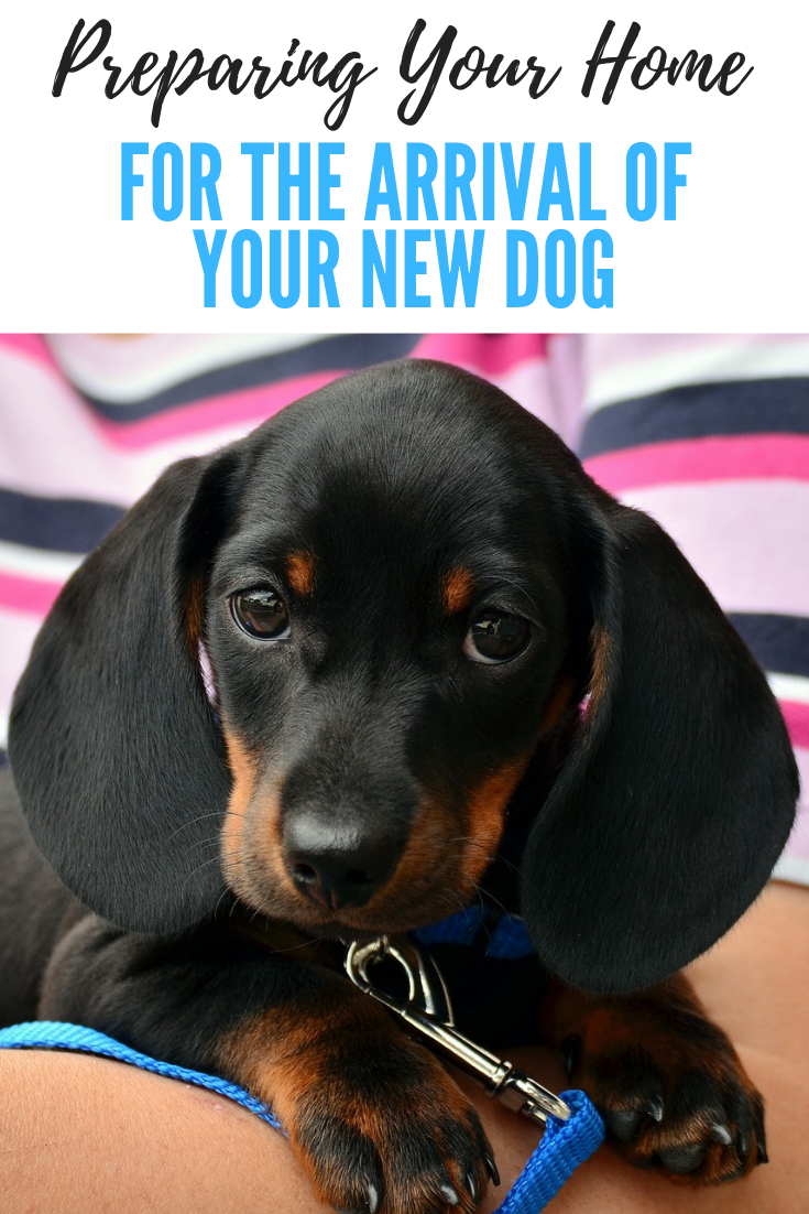 Preparing Your Home for the Arrival of Your New Dog