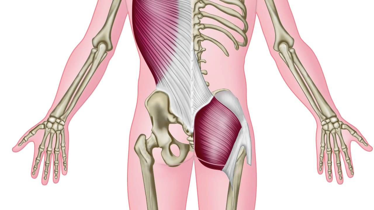 Image result for posterior core muscles | Yoga: Anatomy: LauraGYOGA ...