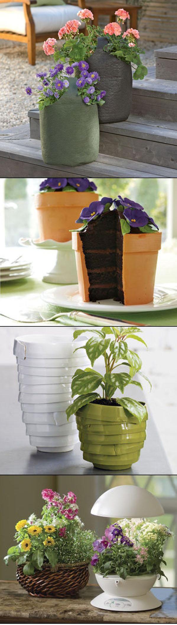 Easy And Beautiful Bonsai Ideas DIY & Crafts Tutorials