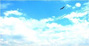 ¿Hasta dónde te atreves a volar? #reilusionarse