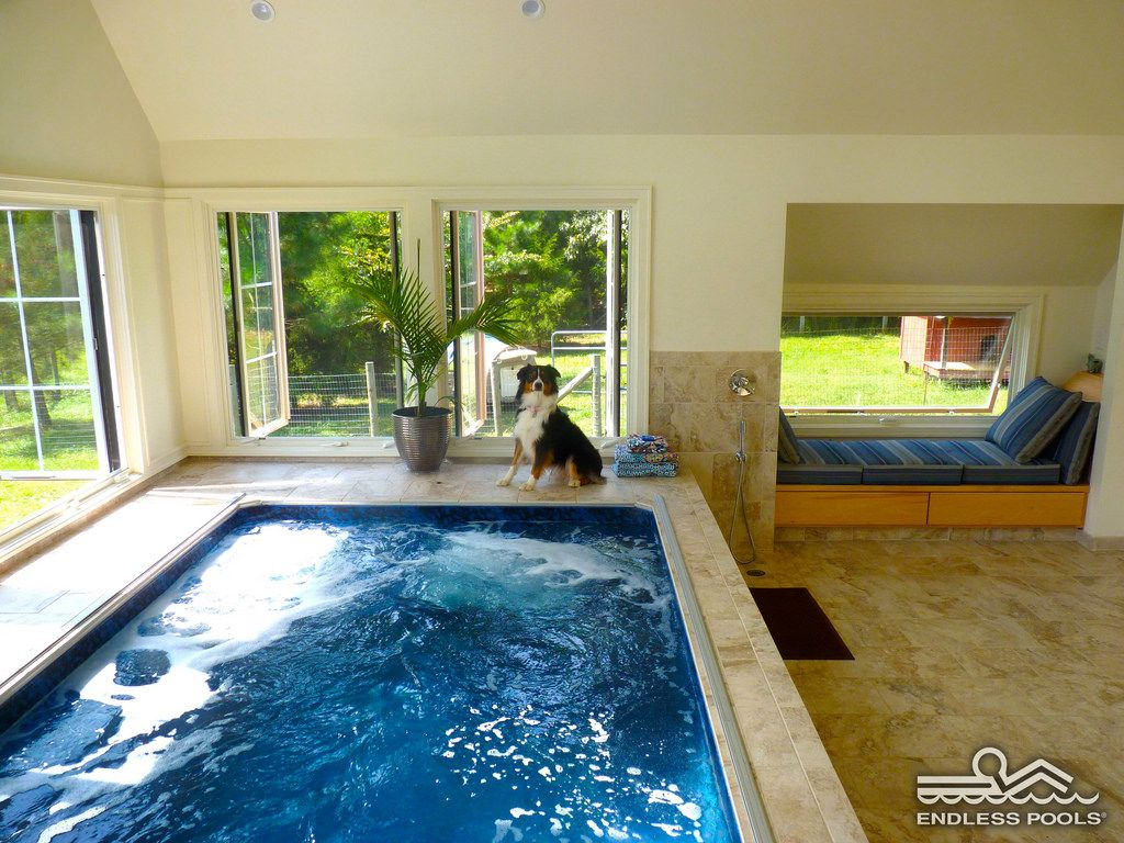 Indoor Endless Pool With Dog Cool Pools Swimming Pools