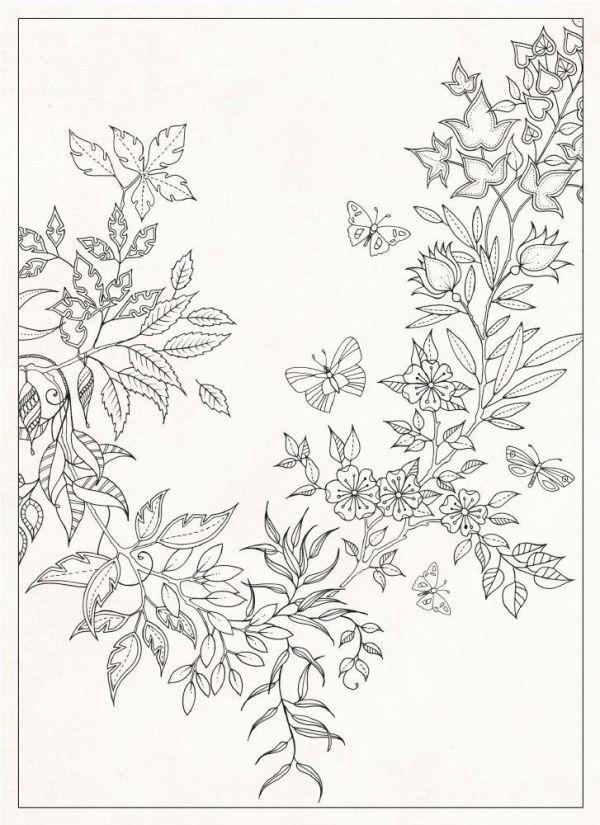 Secret Garden 20 Postcards Amazoncouk Johanna Basford Books By Eileen