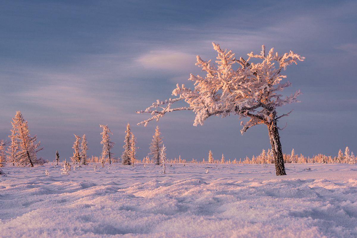 Картинки севера природа севера