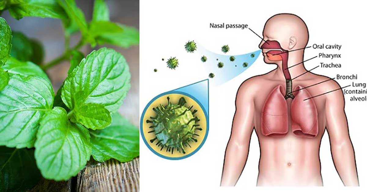 9 Herbs to Boost the Immune System and Repair Lung Damage