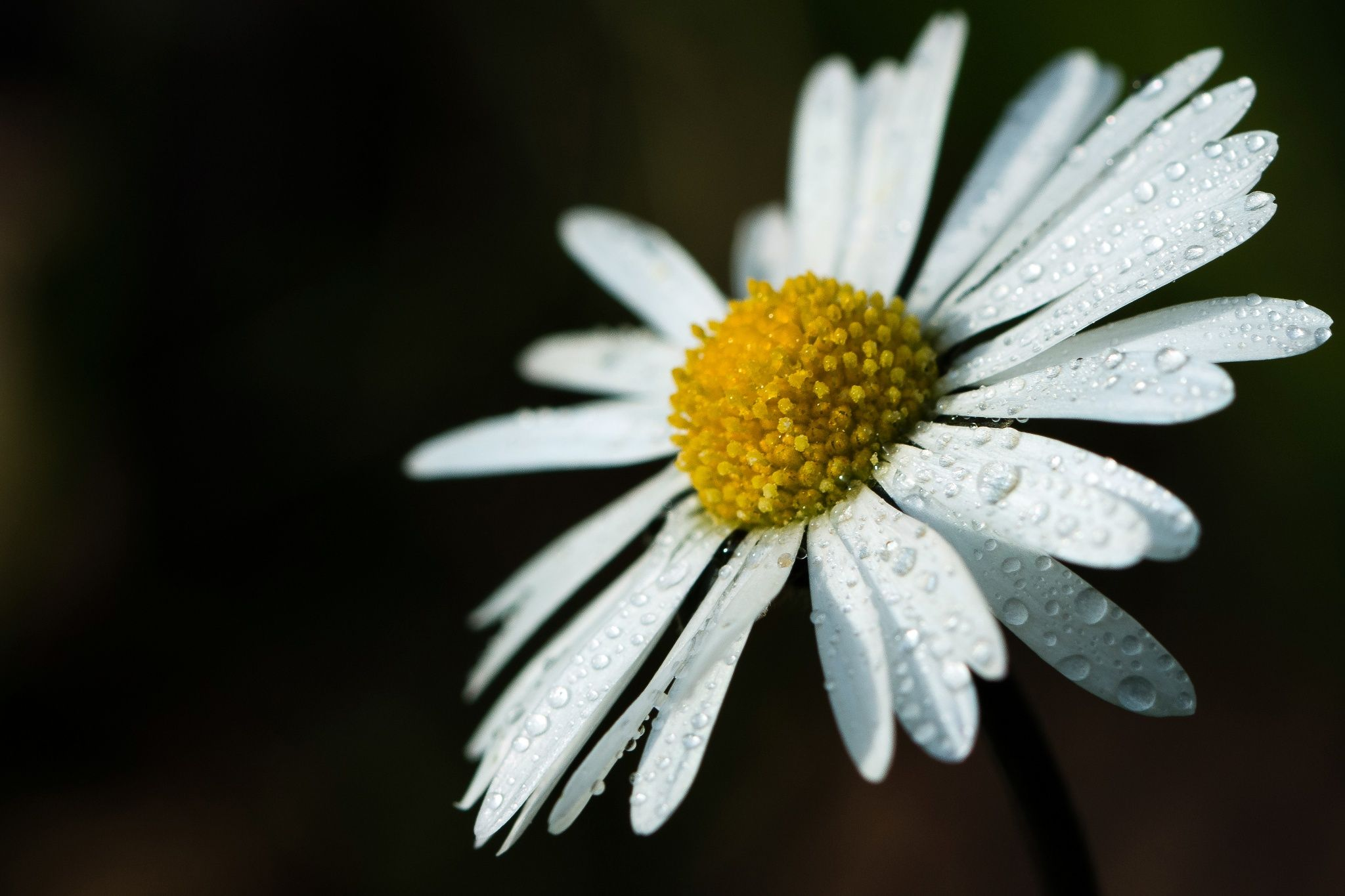 flower*** by David Parenteau on 500px