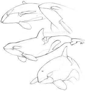 Orca sketches in 2012