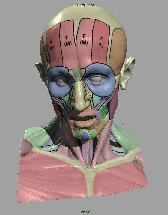 L\'Ecorche Anatomy App Michael Defeo / Scott Eaton. | Naked/nude ...