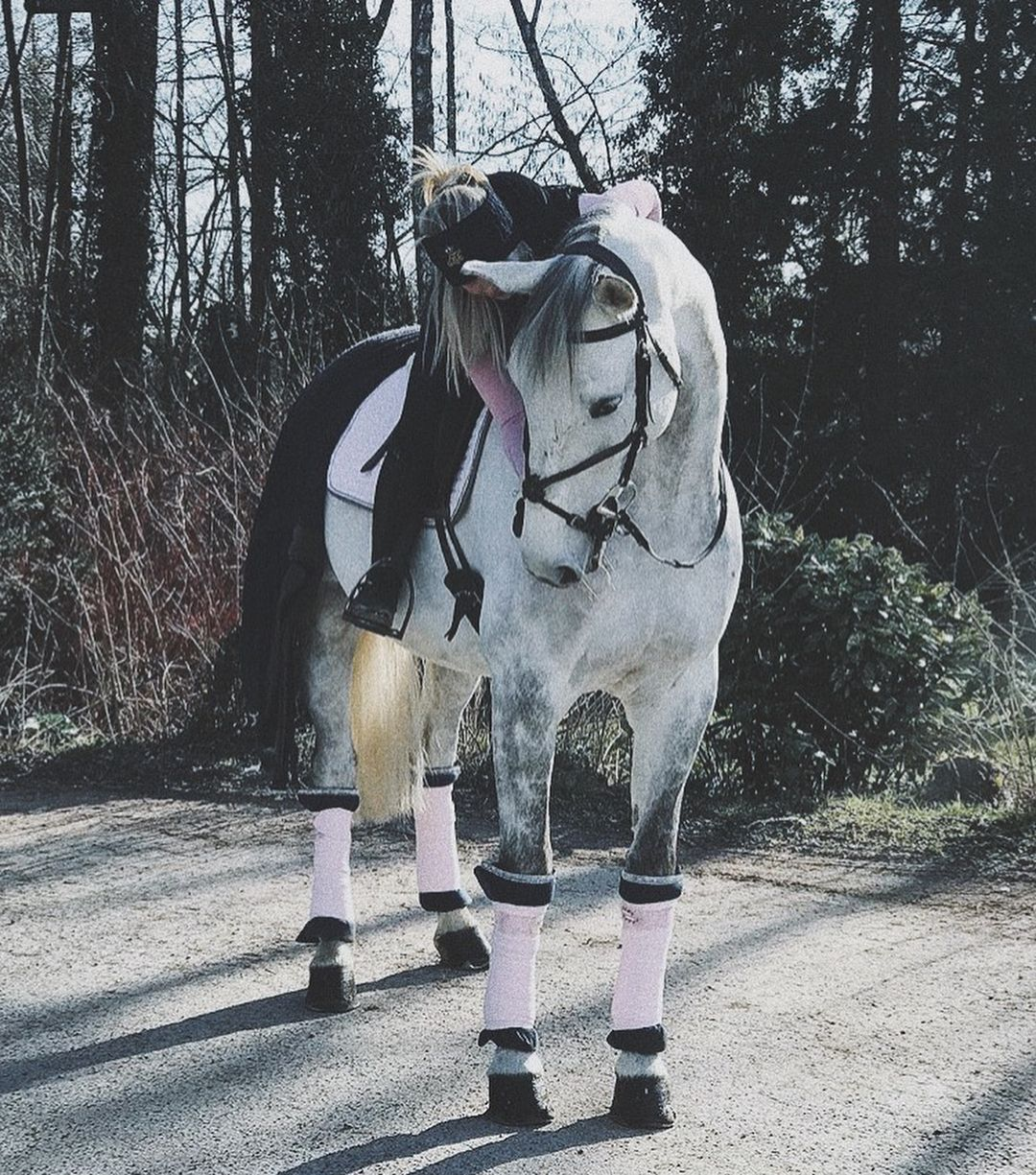 Equipement Equitation Rose Cheval Gris Photographie Equestre Image Cheval