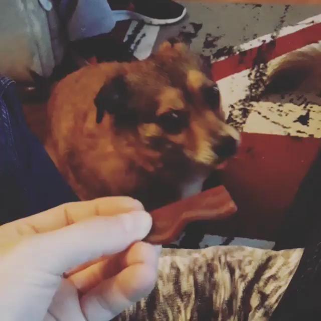 #dogsofgermany #dogwalker #dogsofinstagram #dogofinstagram #dogphotography #doglife #dogoftheday #doglovers #doglover #dogs #doglove #doggy #dog #dresdendogs #kassel #kasselfornia