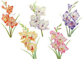 511e67be4 Image result for watercolor gladiolus tattoo | Tattoos | Gladiolus ...