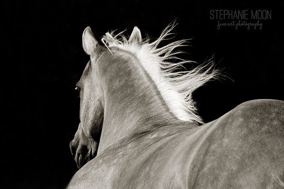 Horse photography black and white horse picture horse poster western decor horse running wind blowing mane horse black palomino horse