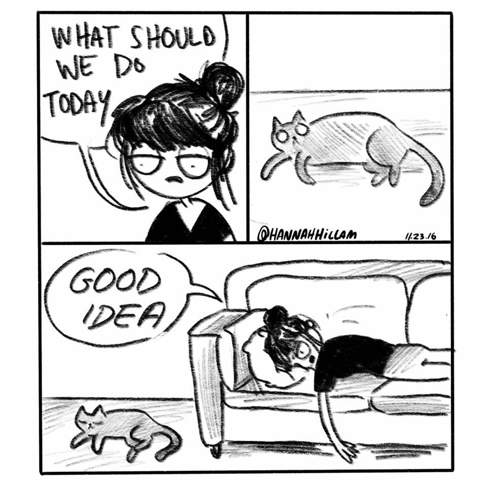 Pin By Sarah Anderson On Real Estate: Funny Cats, Cat Comics