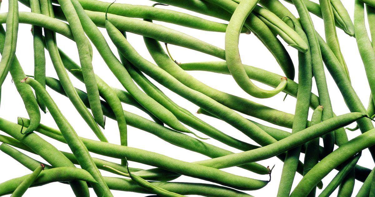 """¿Cómo cocinar habichuelas verdes?. Haricot Verts significa """"judías o habichuelas verdes"""" en francés. Aunque el término puede ser usado para referirse a todas las judías, solemos asociar haricot verts con la variedad delgada, larga, que también se llama judía filet. Estas habichuelas verdes son simbólicas de la ensalada Niçoise, una mezcla de aceitunas, patatas asadas, tomate, atún, ..."""