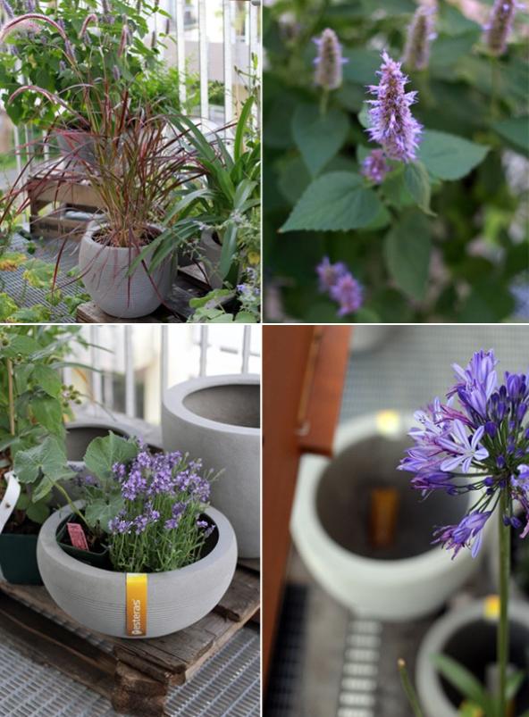 tipps f r bienenfreundliche pflanzen auf dem balkon bienen pflanzen balkon bienenfreundlich. Black Bedroom Furniture Sets. Home Design Ideas