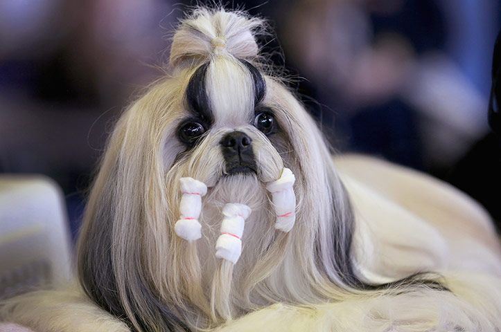 Westminster Kennel Club Dog Show The Best Of Day One In
