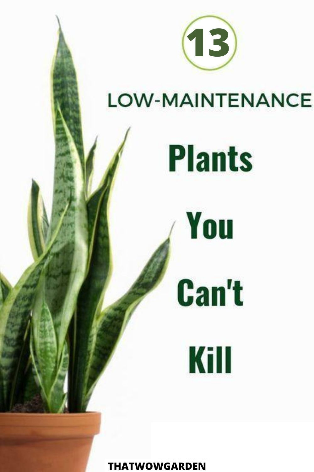 13 low maintenance plants that anyone can care for. If you are a beginner gardener, then these low maintenance plants will be amazing for you to begin with. These are beautiful and easy to care for plants. #lowmaintenanceplants #easytocare #beginnerplants