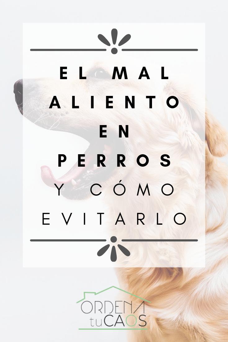 Photo of EL MAL ALIENTO EN PERROS Y COMO EVITARLO
