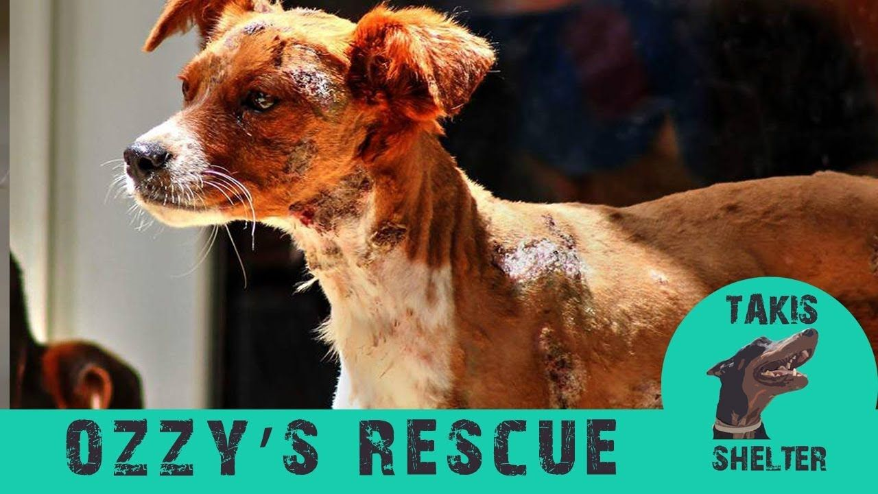 Puppy Found Hanged Burned And Tortured But Got Rescued And Became