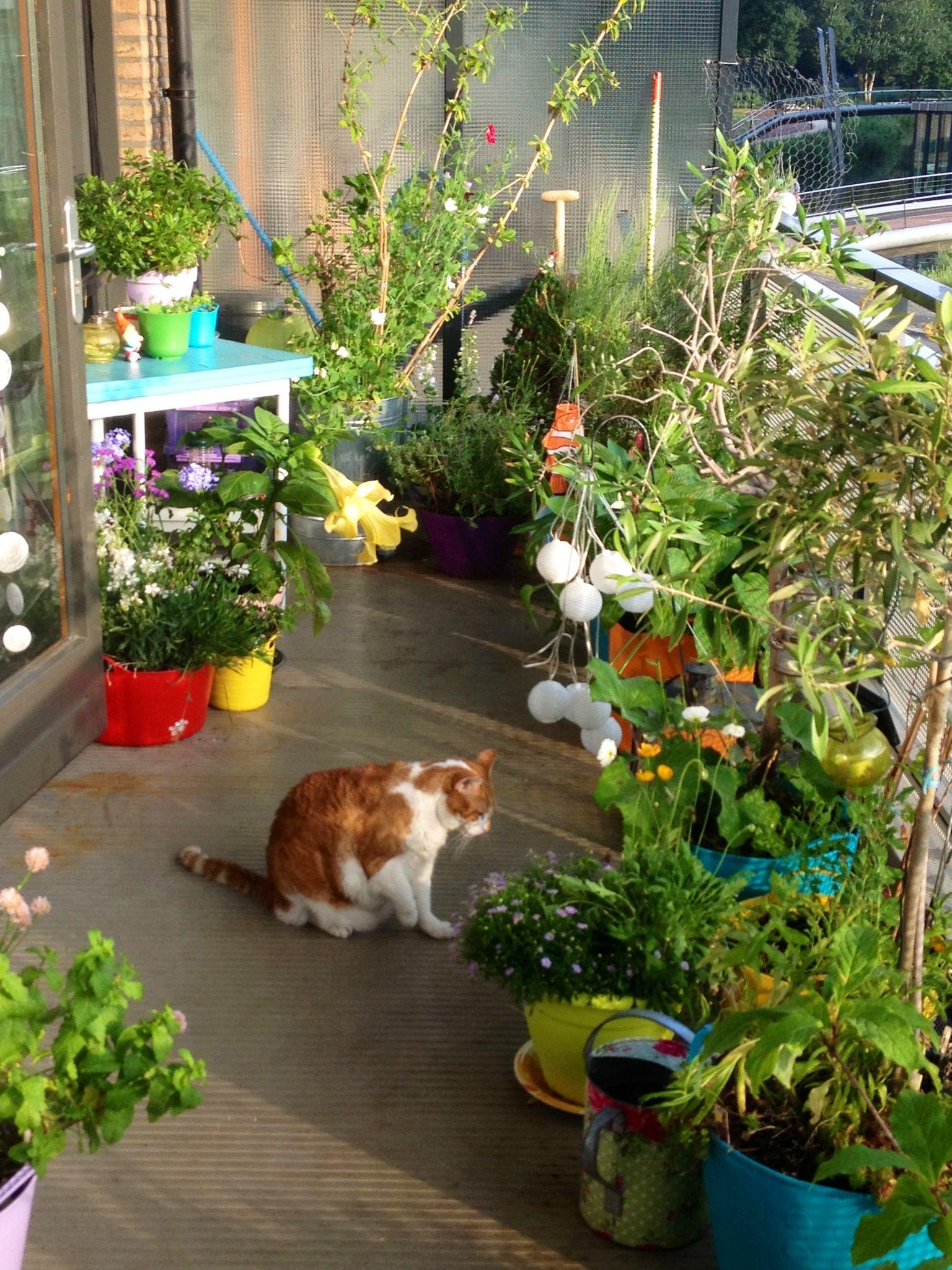 Balcony Garden/kitty sanctuary. | Beach Living | Pinterest | Balcony ...