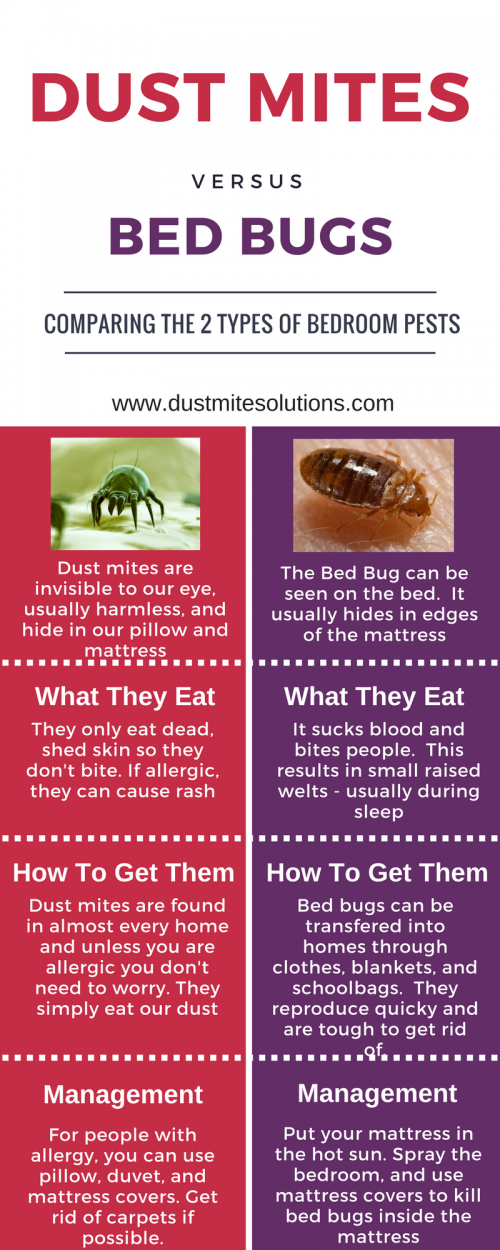 Think You Have Dust Mite Bites?...Think Again Dust mites