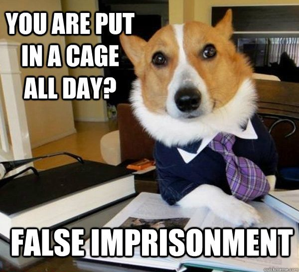 lawyer dog! Cage is false imprisonment.