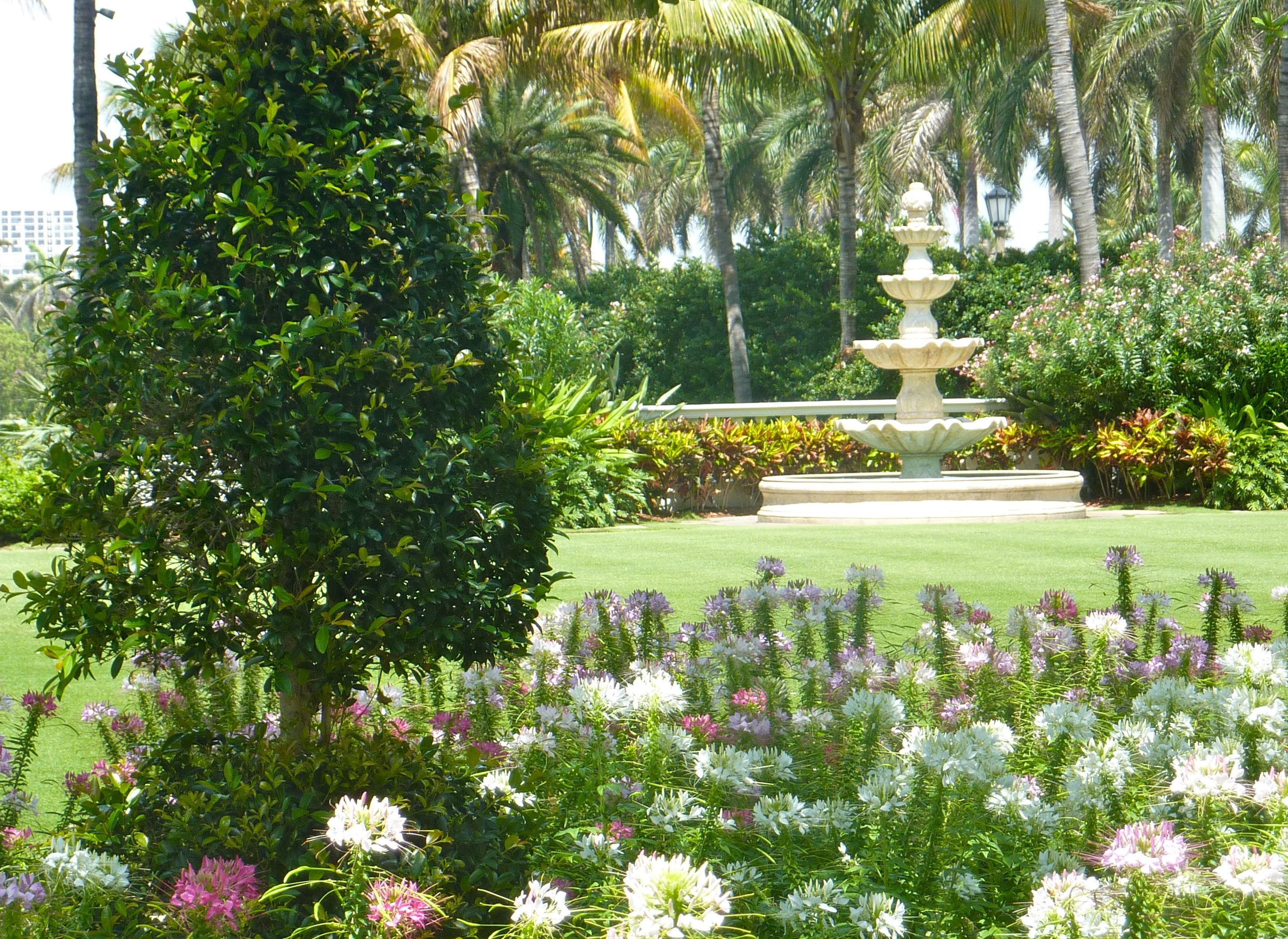 Cleome in full bloom at the Breakers, Palm Beach. | Garden ~ Formal ...