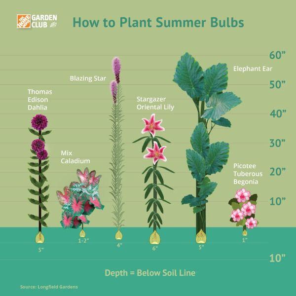How To Plant Summer Flowering Bulbs Planting Bulbs Summer Bulbs Plants