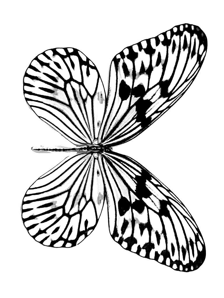 Free Printable Butterfly Coloring Pages For Kids Butterfly Coloring Page Colorful Butterflies Butterfly Drawing [ 1024 x 768 Pixel ]