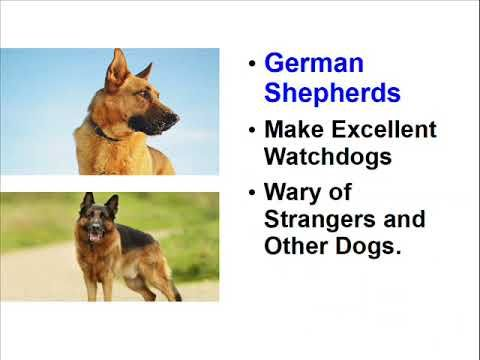 Facts about German Shepherds - Very Interesting Dogs