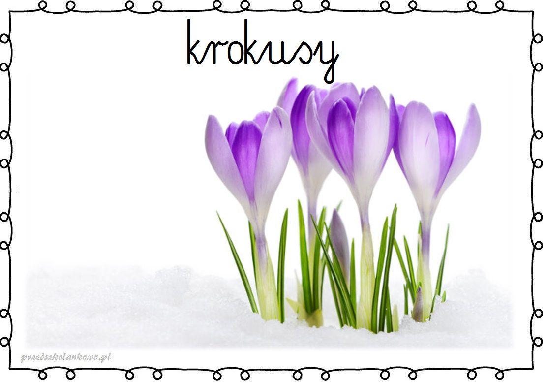 Wiosenne Kwiaty Plansze Zestaw 1 Przedszkolankowo Crocus Flower Flower Meanings Crocus