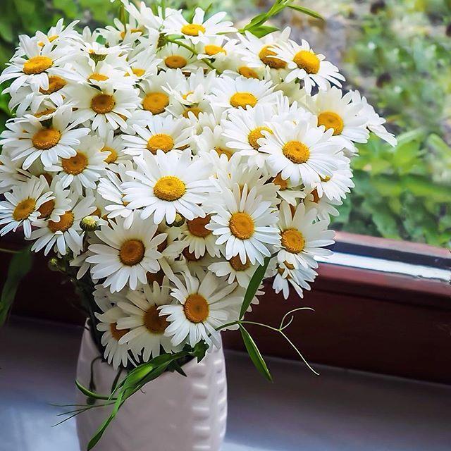 Bukiet Kwiatow Polnych Na Dobry Poczatek Weekendu Jakie Macie Plany My Jesli Tylko Pogoda Pozwoli Ruszamy Zwiedzac Okolic Instagram Photo Flowers Instagram