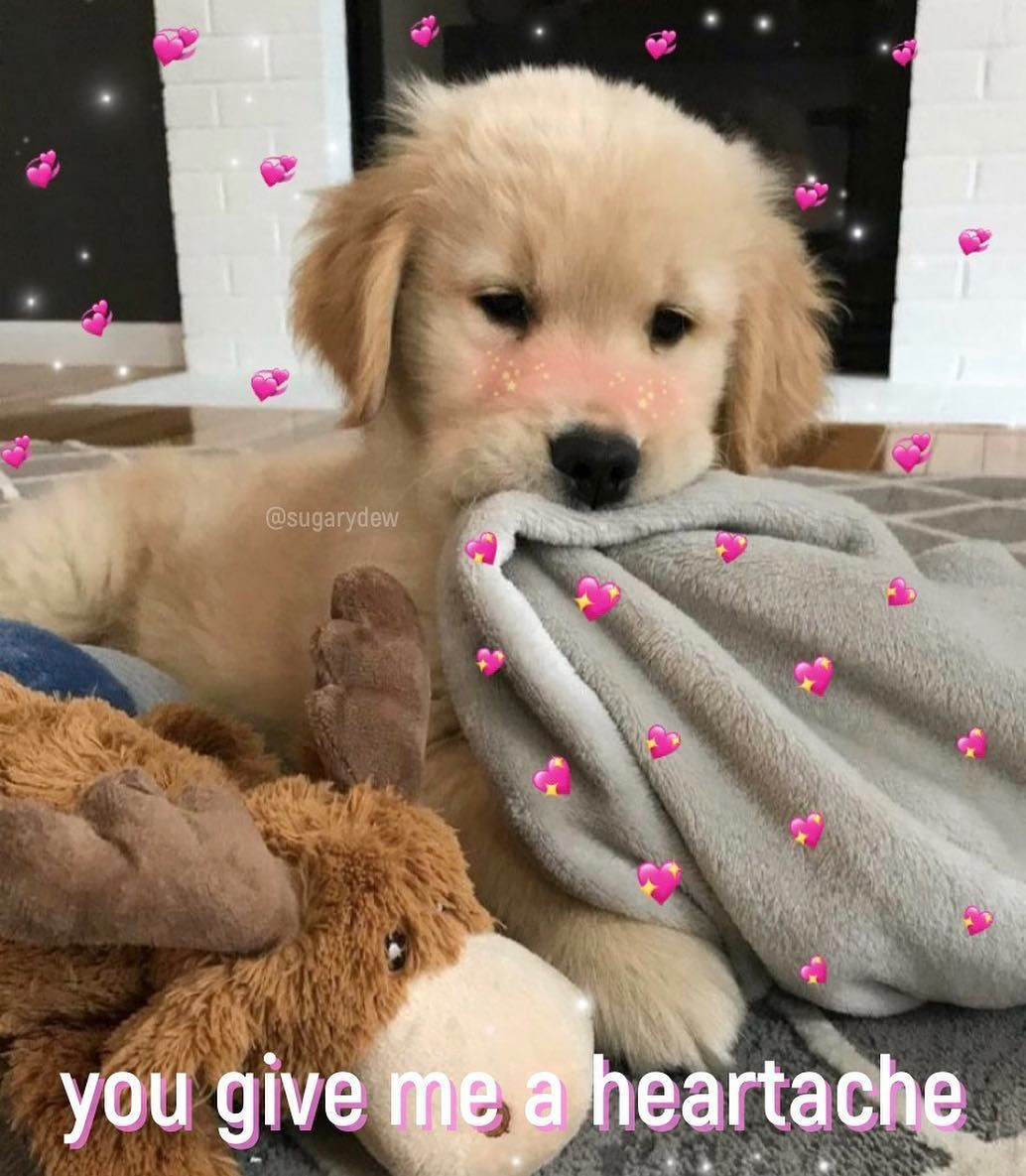 I M Tired New Wholesome Wholesomememes Cute Love Happy Selfcare Positivity Happiness Lovememes Ily Cuddling Meme Cute Memes Cute Love Memes