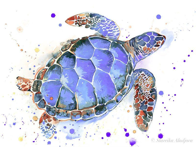 Purple Sea Turtle Watercolor Painting Print By Slaveika Aladjova