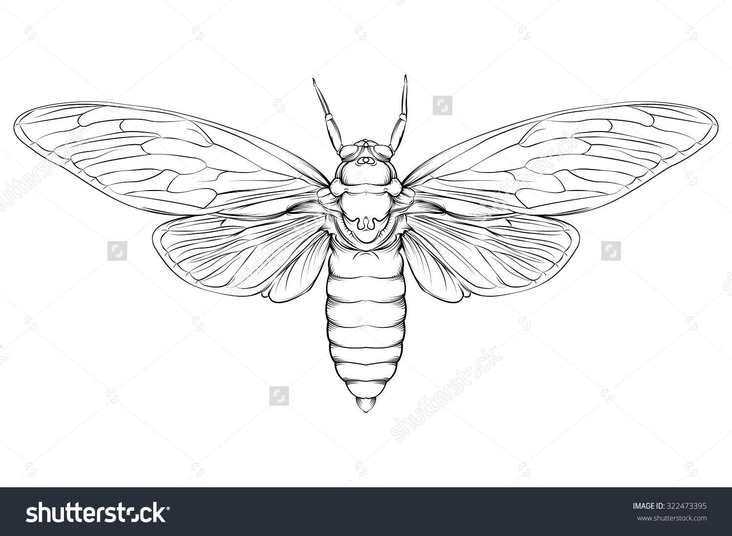 vector drawing of a large moth line drawing easy to edit