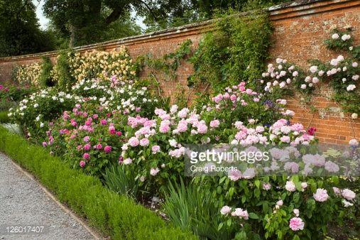 Mixed Rose Border In The Rose Garden Mottisfont Abbey Uk Summer Rose Garden Landscape Garden Visits Garden Pictures