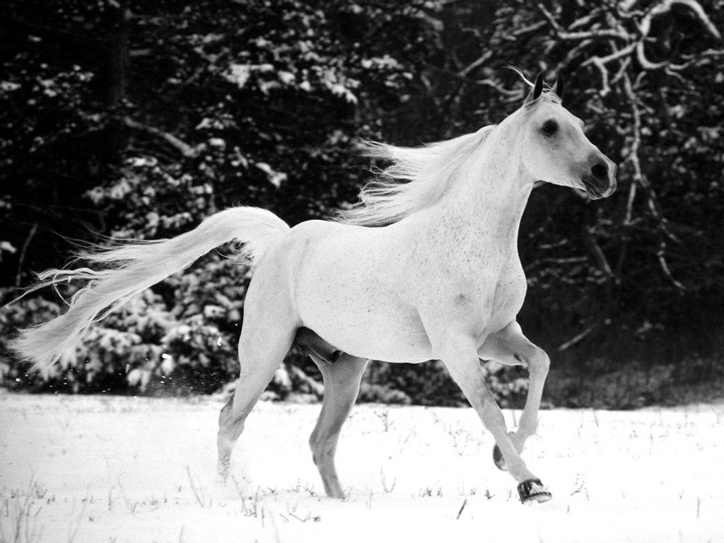 horse taking in the pearly snows of a deep winter