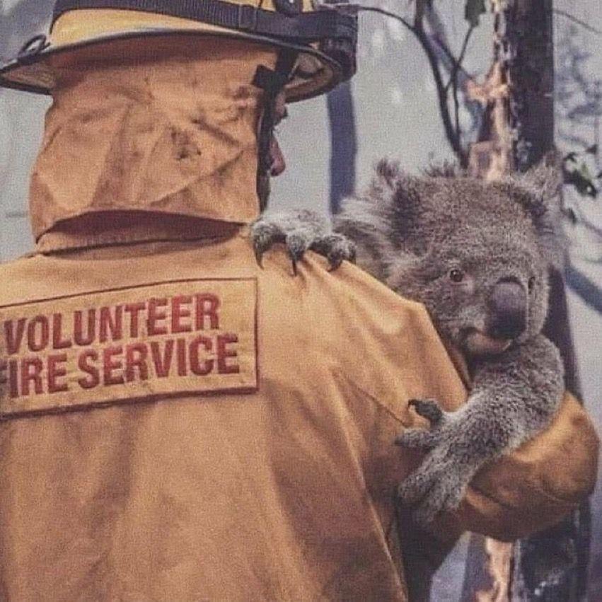 Pin By Lisa V Tasi On Koala Me In 2020 Koala Save Animals Animals