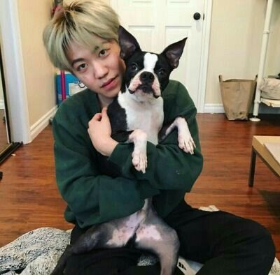 Bloo ❤ | k-pop/k- hiphop in 2019 | Animals, Boston terrier