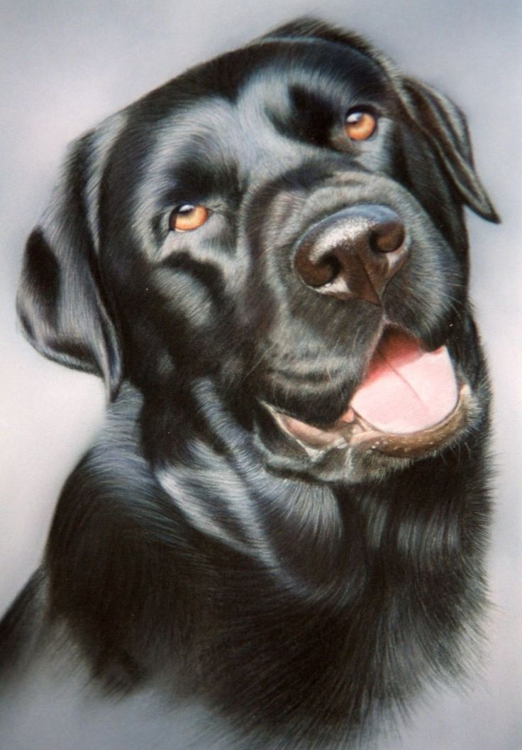 Learn To Draw Animals Pet portraits, Dog face drawing